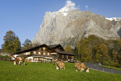 Mountain farmhouses with Wetterhorn Stock Images