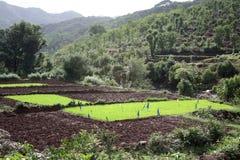 Mountain Farming Stock Photo