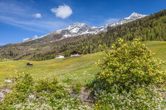 Mountain Farms in South Tyrol, Italy Stock Image