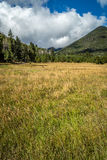 Mountain field meadow Royalty Free Stock Images