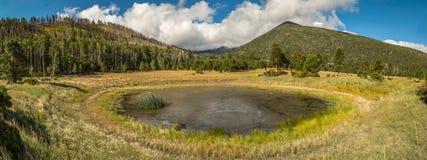 Mountain field meadow Royalty Free Stock Photo