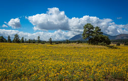 Mountain field meadow Royalty Free Stock Photography