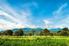 Mountain and field. Mountain view and blue sky Stock Images