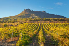 Mountain and field with vineyards. Stock Image
