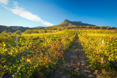 Mountain and field with vineyards. Royalty Free Stock Photography