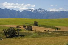 Mountain and fields. A scene of snow on the back mountains with wheat fields in the foreground stock image