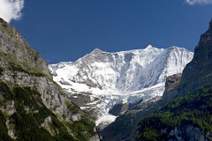 The mountain Fiescherhorn in Grindelwald Stock Image
