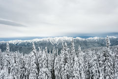 Mountain Filled With Snow Near Pine Trees during Daytime Royalty Free Stock Image