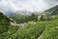 Mountain Fisht. Caucasus. The Caucasian reserve. Mountain Fisht. Summer 2009 Royalty Free Stock Photo
