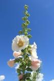 Mountain Flower. Stock Image