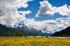 Mountain flower field landscape Royalty Free Stock Photos