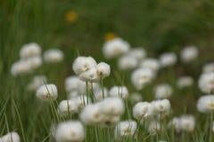 Mountain flower Stock Photo