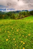 Mountain flower meadow with mountain Stock Photography