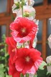 Mountain Flower. Stock Photos