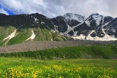 Mountain flowers Stock Photos