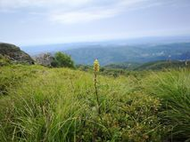 Mountain flowers. Beautiful meadow and mountain landscape in Romania Royalty Free Stock Images