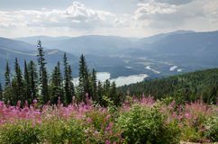 Mountain with flowers in Canada Royalty Free Stock Image