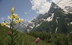 Mountain flowers of caucasus Stock Photos