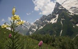 Mountain flowers of caucasus. The North Caucasus. Foothills of Elbrus. Summer 2009 Stock Photos