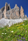 Mountain flowers in Dolomites Mountains Stock Photo