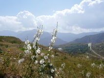 Mountain flowers. Flowers on the hillside at the Rogun town Tajikistan Stock Photography