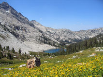 Mountain Flowers and Lake. Twin Lakes and Mountain Flowers in the Sawtooth Wilderness Royalty Free Stock Photo