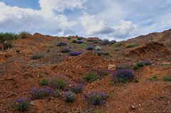Mountain flowers red stones Royalty Free Stock Images