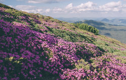 Mountain flowers in a sunny day. Color toning. Low contrast. Ins Stock Photo