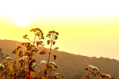 Mountain flowers with sunrise light Stock Photography