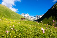 Mountain flowers in the valley. Chauhi peaks. Mountain flowers in the valley. Tourist camp. Chauhi peaks. A great place to relax Royalty Free Stock Photo