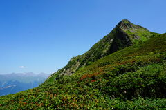 Mountain with flowers Royalty Free Stock Photos