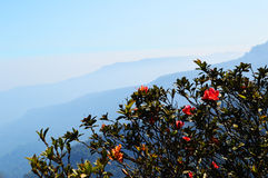 Mountain flowers. Wild roses plants and trees Stock Photography
