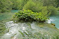 Mountain flowing stream or wild water amaongst the stones Stock Photo