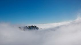 Mountain in fog. Lonely trees looking out from fog on a mountain covered with snow Royalty Free Stock Image