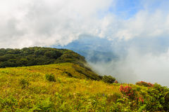 Mountain and fog at Doi inthanon in Chiangmai province,Thailand. Beautiful mountain and fog at Doi inthanon in Chiangmai province,Thailand stock photography