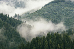 Mountain fog over forest Royalty Free Stock Photos