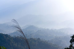 Mountain and fog in tropical 01 Royalty Free Stock Image
