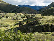 Mountain foothills in spring. Green spring growth on meadows and trees in rolling foothills of the Ochoco Mountains in eastern Oregon stock photography