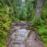 Mountain footpath in the deep woods Stock Photography