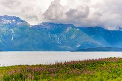 Mountain with foreground Fireweed flowers and cloudy sky Alaska. On a cold summers day royalty free stock photography