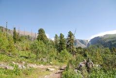 Mountain forest. Near karakol lakes Stock Photos