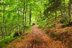 Mountain forest. In Pyrenees, France Stock Photos