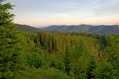 Mountain forest. In summer. Mountains and blue sky. Sunset in the mountains royalty free stock photo