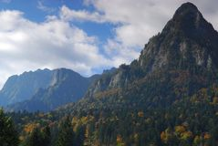 Mountain and forest. In the fall Royalty Free Stock Image