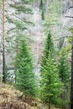 Mountain forest. Health resort Belokurikha, Altay, Siberia Royalty Free Stock Photography