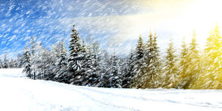 Mountain forest. With first winter snow Royalty Free Stock Photo