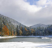 Mountain forest. With first winter snow Royalty Free Stock Photos