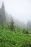 Mountain forest Stock Photos
