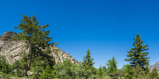 Mountain Forest in American West Stock Image