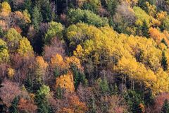Mountain forest in autumn color trees texture background. Fall mountain forest, autumn colorful trees texture background stock photos